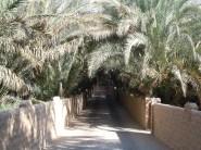 Al Qattara 19