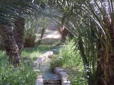 Al Qattara 22