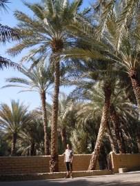 Al Qattara 27