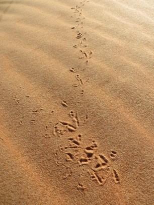 Footprints 6