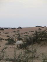 Safari 14