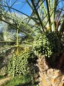 Al Khaly Farms 12