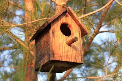 Finding What Materials For Your Wooden Bird House