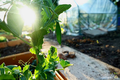 Smart Vegetable Gardening Ideas for People with Limited Garden Space