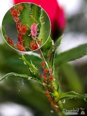 Pest Control For A Natural Vegetable Garden