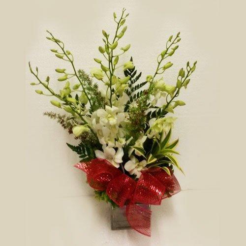 Dream Makers Florist Barbados 6 Orchids