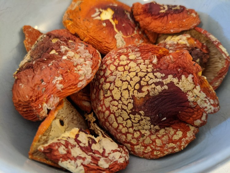 Amanita muscaria dried caps