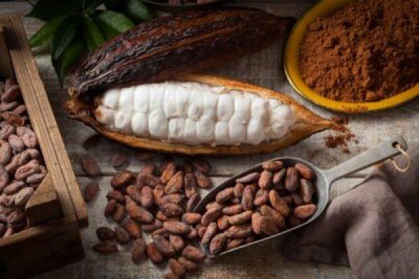 Cocoa (Theobroma cacao)