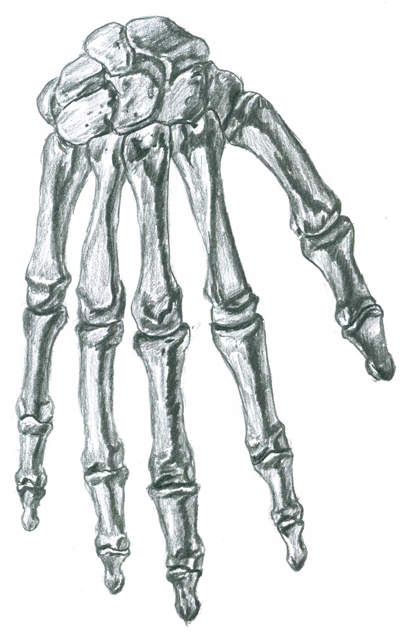 Human Skeleton Hand Drawing