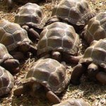 tortoises, tortoise and hare, dream metaphor, dream symbol