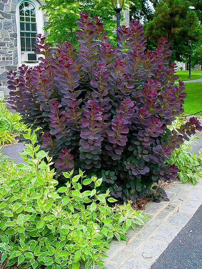 50 Trend Front Yard And Backyard Landscaping Ideas On A Budget BackyardLandscaping 37