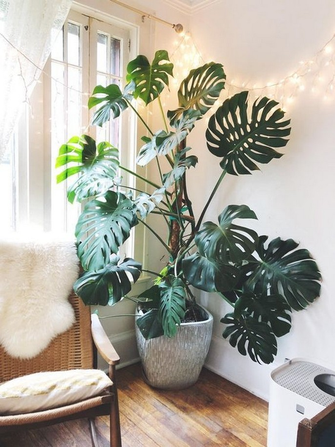 11 Indoor Plants For Home Or Office – Home Decor 17