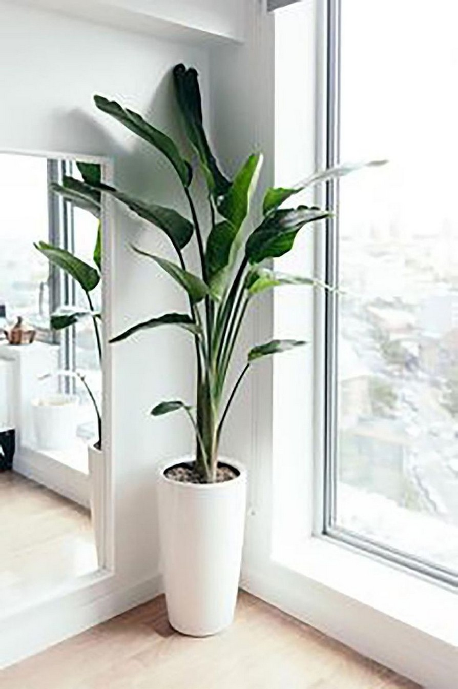 11 Indoor Plants For Home Or Office – Home Decor 21