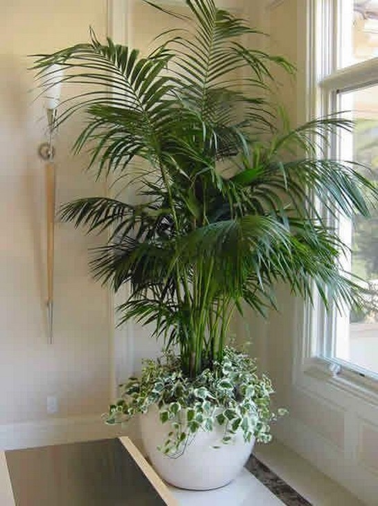 11 Indoor Plants For Home Or Office – Home Decor 26