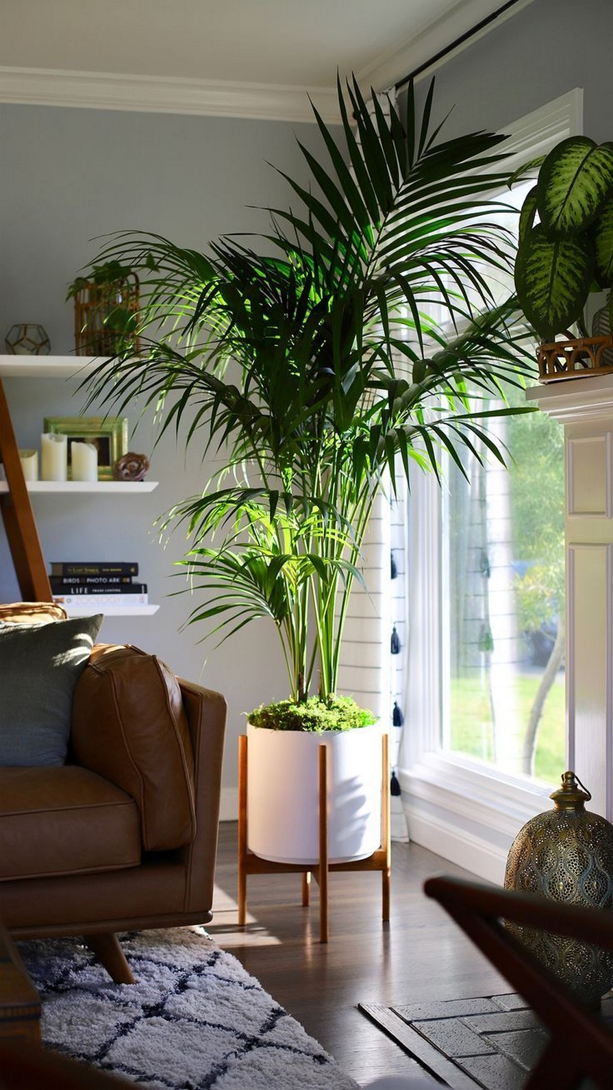 11 Indoor Plants For Home Or Office – Home Decor 33