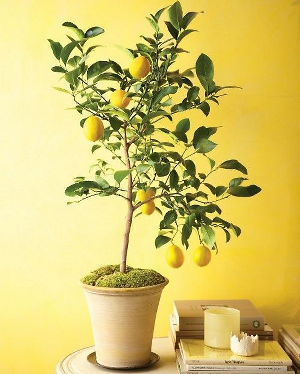 10 Indoor Plant Care Tips Home Decor 11