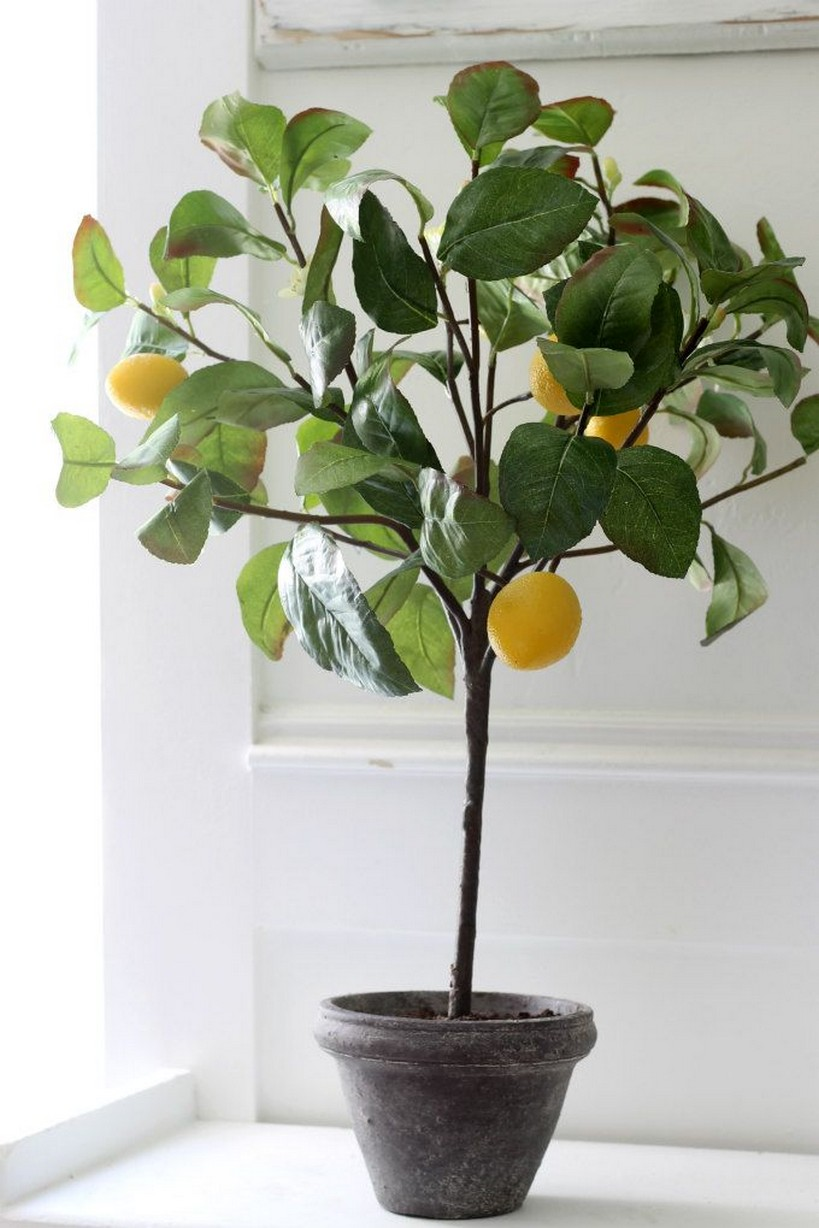 10 Indoor Plant Care Tips Home Decor 8