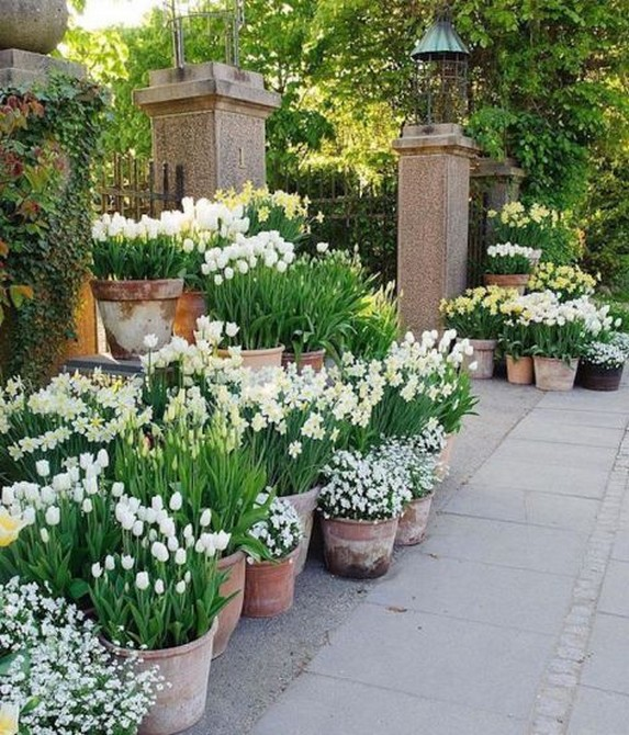 11 Outdoor Potted Plants Grow Helping 4