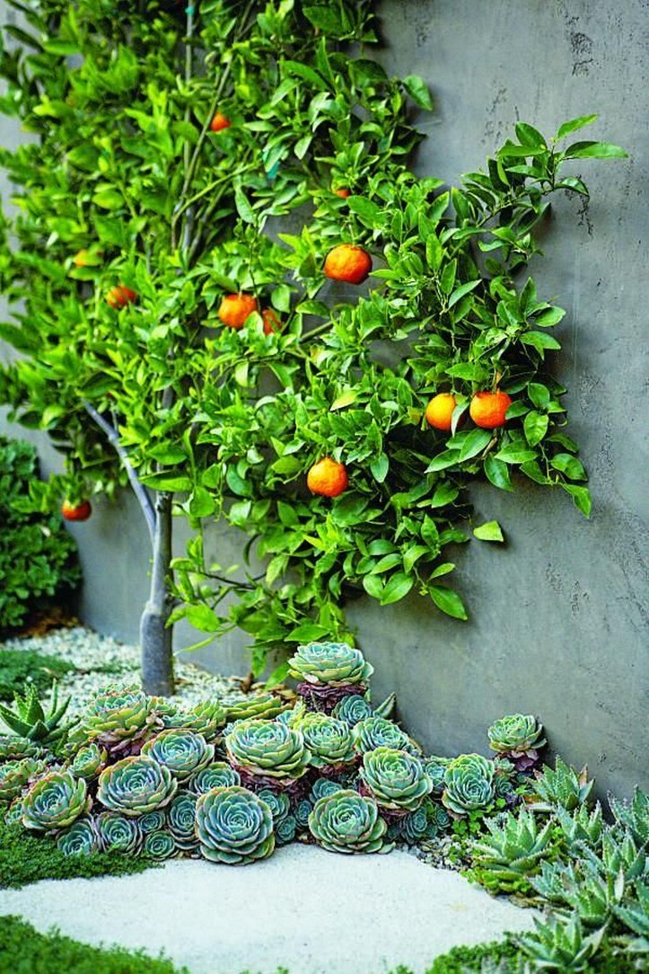 12 Container Gardening Ideas For Pots And Planting Herbs Home Decor 3