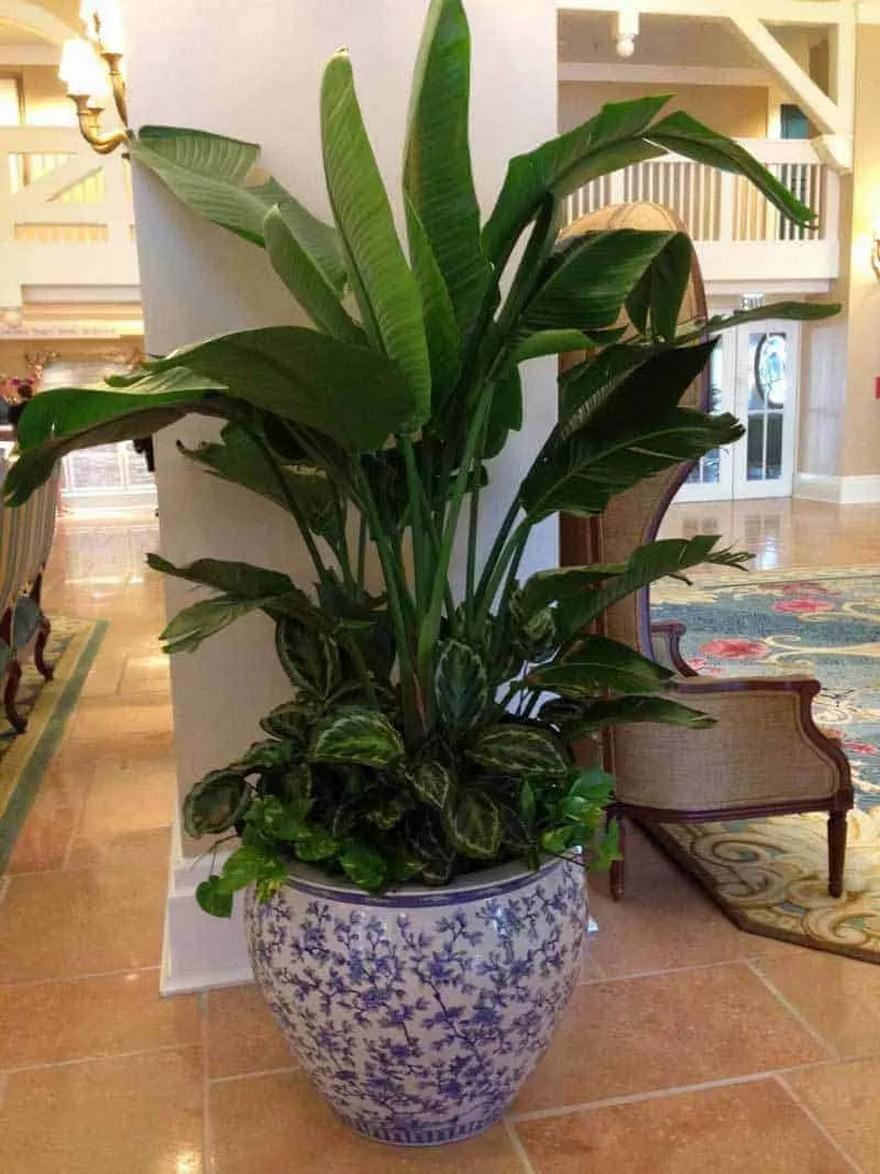 48 Popular Indoor Plants For Tropics Zone 19