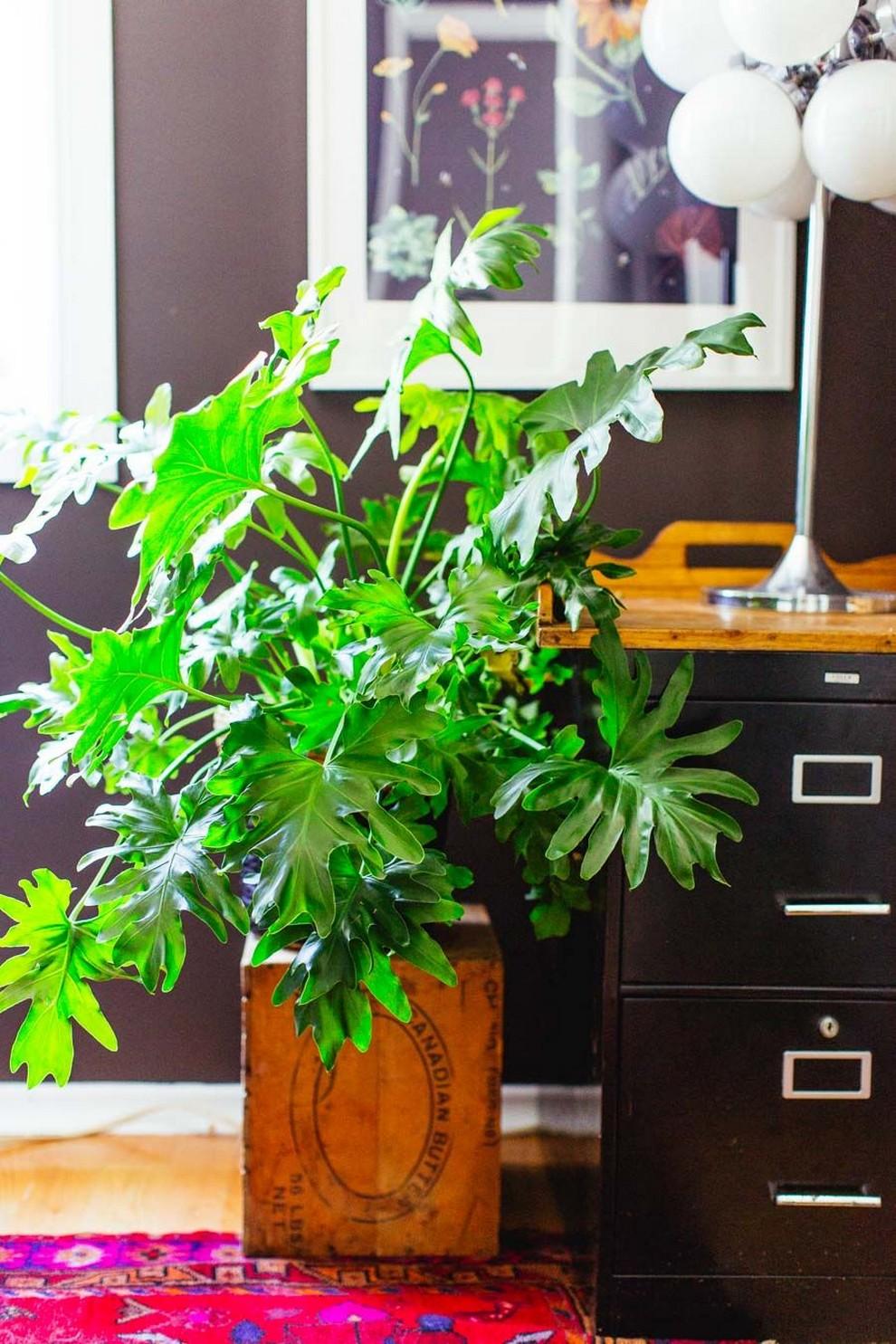 48 Popular Indoor Plants For Tropics Zone 28