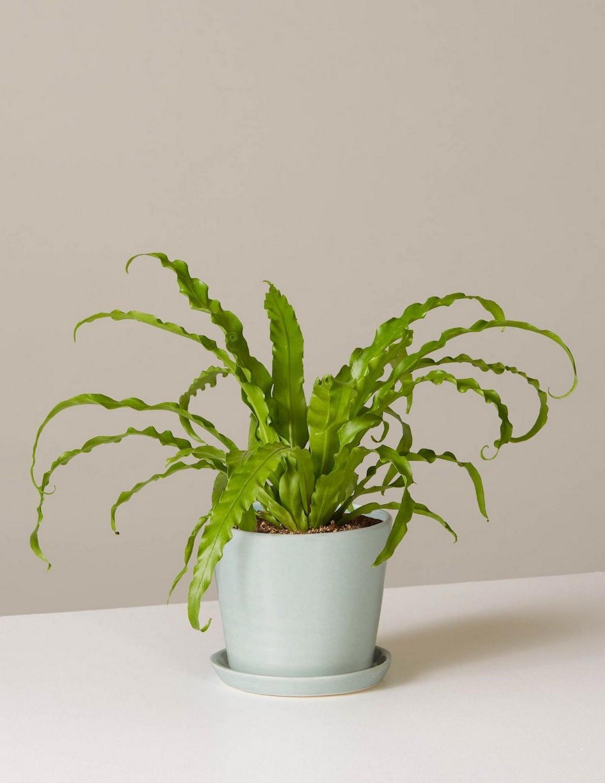 48 Popular Indoor Plants For Tropics Zone 34