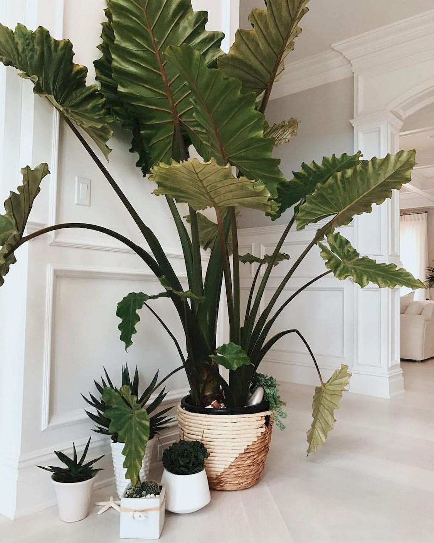 48 Popular Indoor Plants For Tropics Zone 36