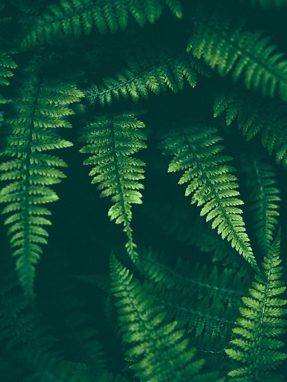 48 Popular Indoor Plants For Tropics Zone 46
