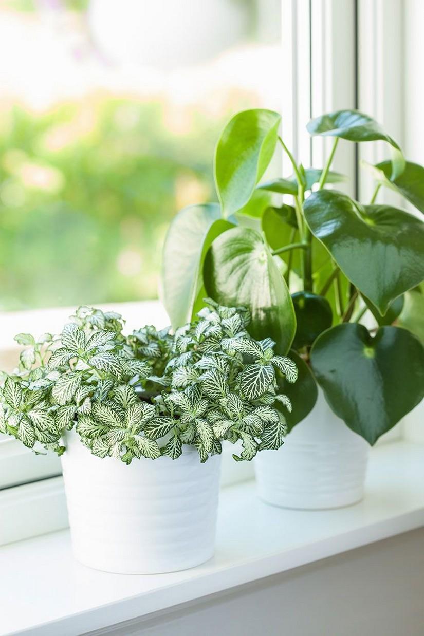 48 Popular Indoor Plants For Tropics Zone 9