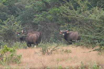 Flora in Dajipur Wildlife Sanctuary