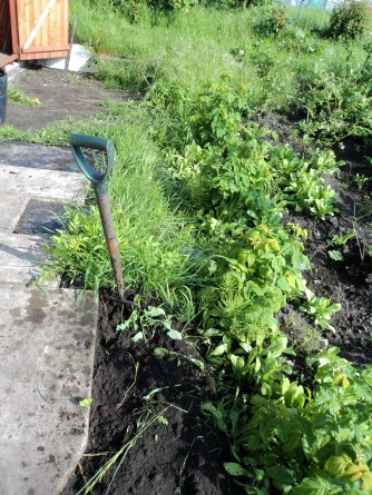 I set too and weeded out all of the grass that had grown.