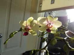 My Orchid now has more flowers