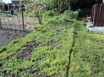 This section is to be weeded.. You can just make out the young apple tree I had 5 glorious apples first time last year..