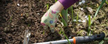 17 Natural Ways to Get Rid of Weeds