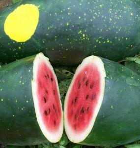 Moon & Stars - Types of Melon