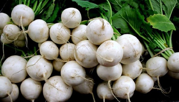 How to Grow Turnips (Plus Nutrition Benefits)