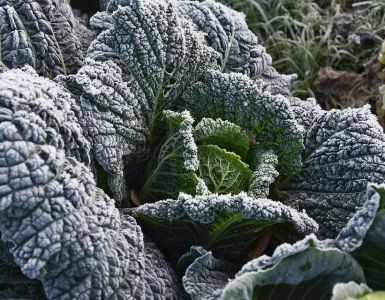 25 Best Fall and Winter Crops for a Good Harvest
