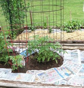 Using Newspaper to Kill Weeds: The Scoop