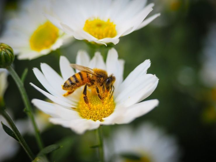 5 Benefits of Bees & How to Attract Them