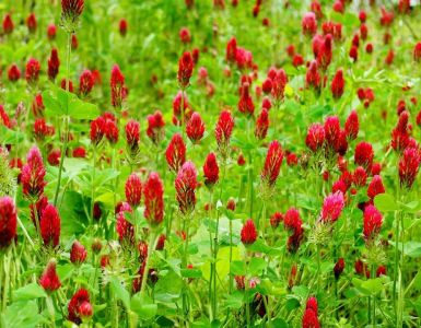 Cover Crops: Benefits, Types, and Uses