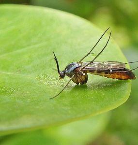 17 Natural Ways to Get Rid of Fungus Gnats