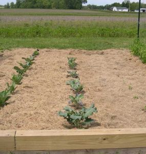 Using Grass Clippings as Mulch & More