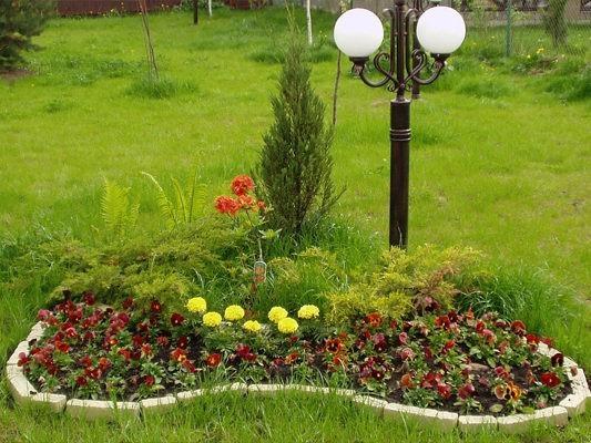Многолетние цветы для дачи фото » DreemPics.com - картинки ...