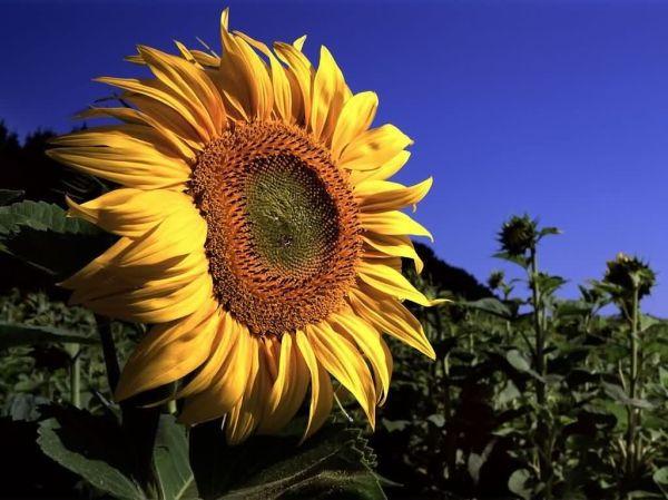 Фото цветок крупным планом » DreemPics.com - картинки и ...
