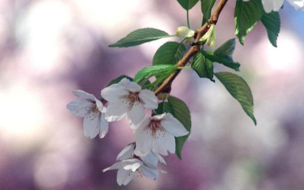 Цветы фото скачать бесплатно » DreemPics.com - картинки и ...