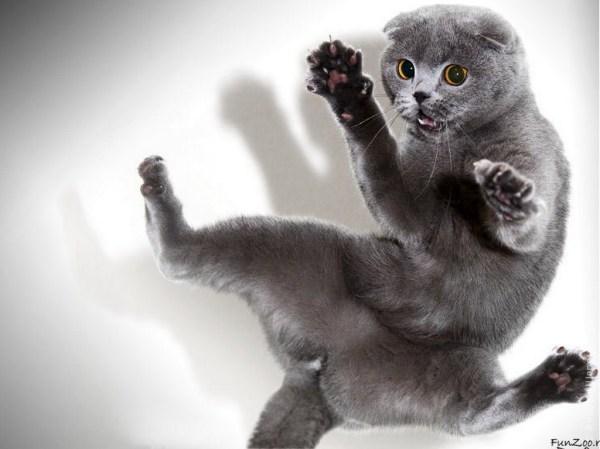 Фото котов и кошек прикольные 187 DreemPicscom картинки и