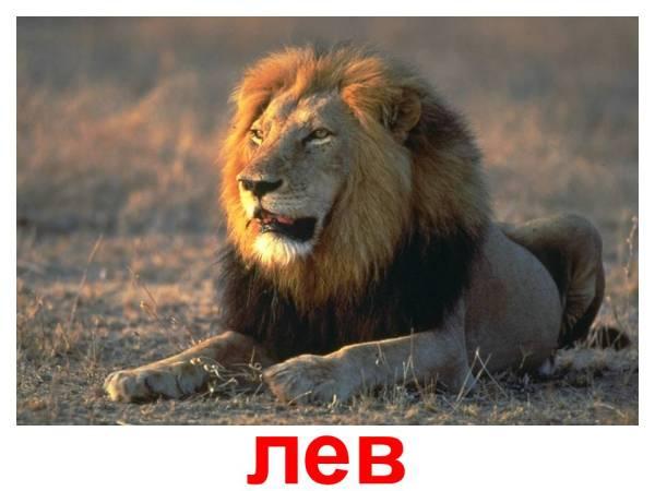 Скачать картинки животных » DreemPics.com - картинки и ...