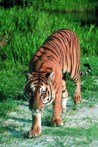 Скачать картинки про животных » DreemPics.com - картинки и ...