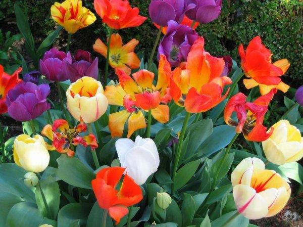 Виды цветов фото » DreemPics.com - картинки и рисунки на ...
