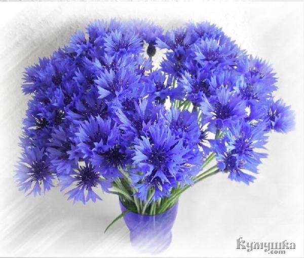 Васильки цветы (фото) » DreemPics.com - картинки и рисунки ...